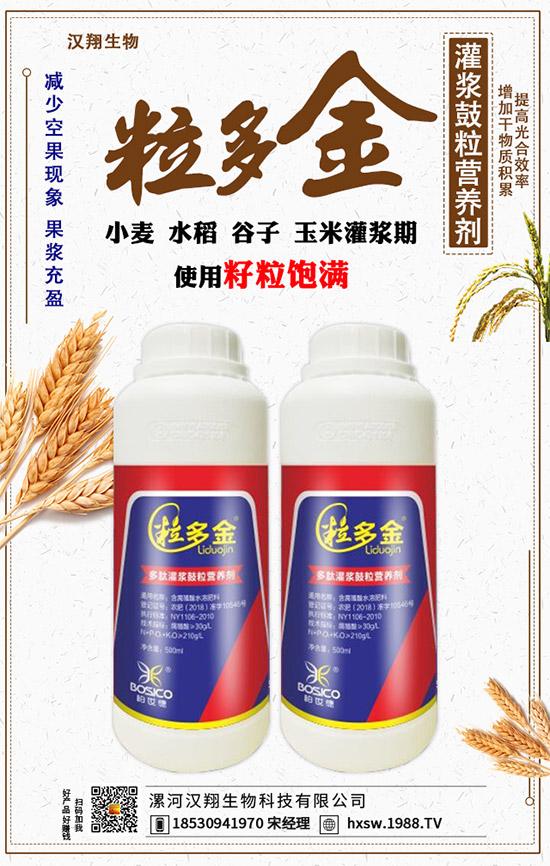 水稻灌浆期对产量有何影响?水稻灌浆期管理技巧看这!高产必备!