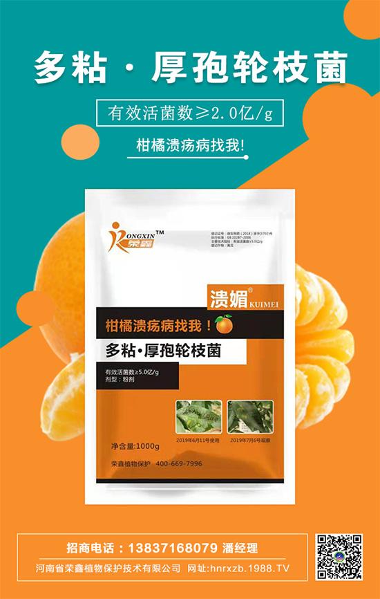 """柑橘���病大面�e爆�l,不防悔�嗄c!""""多粘・厚孢�枝菌""""高效防治!"""