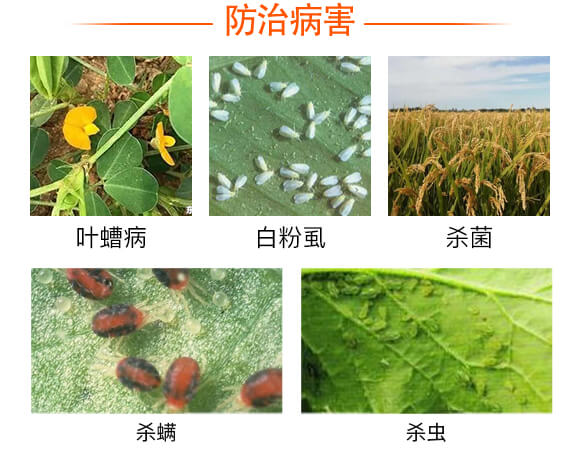硫磺悬浮液体替代品-战粉・硫-强农生物_03