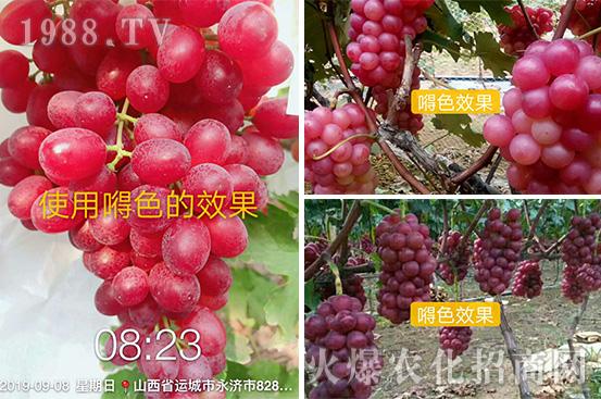 如何才能种出高品质水果?�N色,解决果蔬颜值问题!