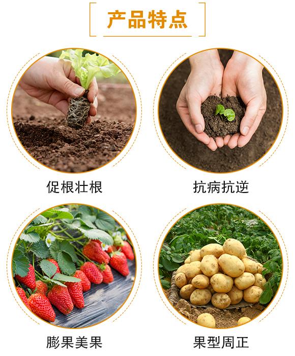 黑金-日正农业_04
