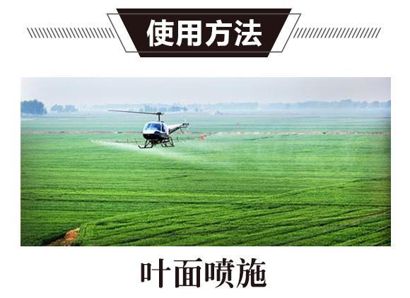 碳氢核肥-绿藻门-碳氢国际_02