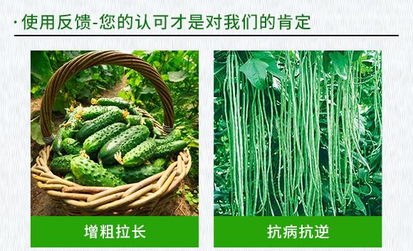 黄瓜、豆角专用含氨基酸水溶肥料-伊力奇-科德宝2