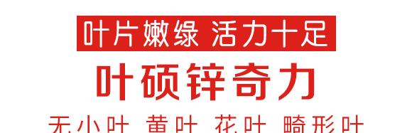 锌奇力(1000g)-叶硕-汤姆生6