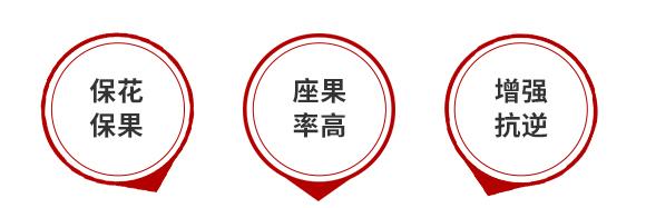 硼奇力(1000g)-叶硕-汤姆生5