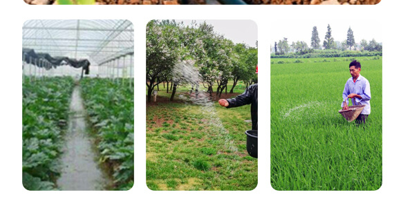 农夫稼园生物技术有限公司_19