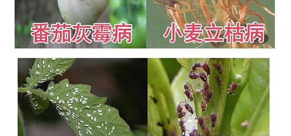 河南腾丰农业科技有限公司2_12