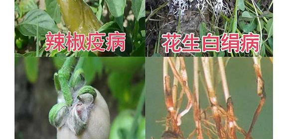 河南腾丰农业科技有限公司2_11