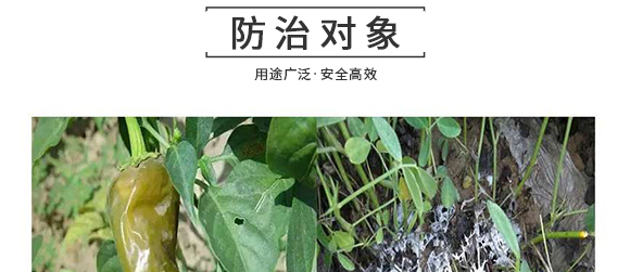 河南腾丰农业科技有限公司2_10