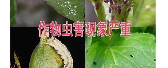 河南腾丰农业科技有限公司2_13