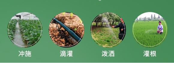 农夫稼园生物技术有限公司2_10