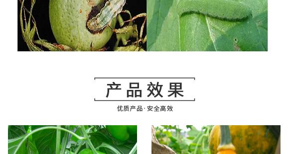 河南腾丰农业科技有限公司2_14
