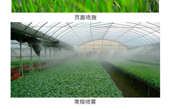 河南腾丰农业科技有限公司1_13