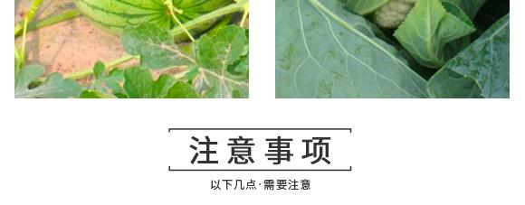 河南腾丰农业科技有限公司2_17