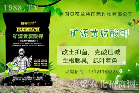 矿源黄腐酸钾在种植中作用有哪些,矿源黄腐酸钾什么时候使用效果更好?