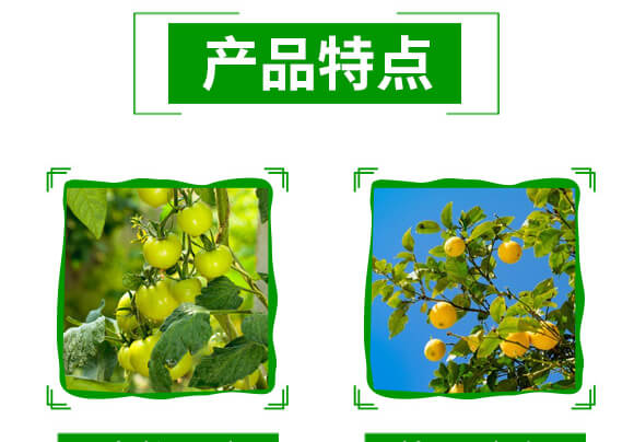 20%金蓟马-神龙农业_04