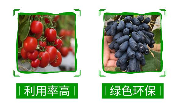 60%苯甲・醚菌酯-靓秀-神龙农业_05