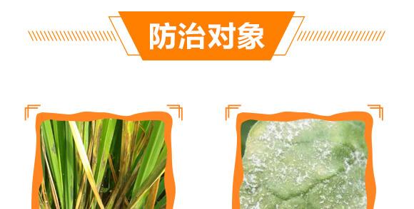 30%苯甲丙环唑-农本乐-赛诺_10
