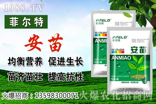 燈籠果生長對環境的要求,燈籠果種植及采收技術!