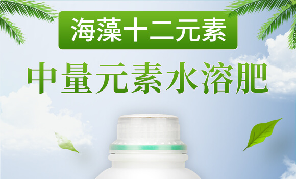 海藻十二元素-邦扶民-英爾果_01