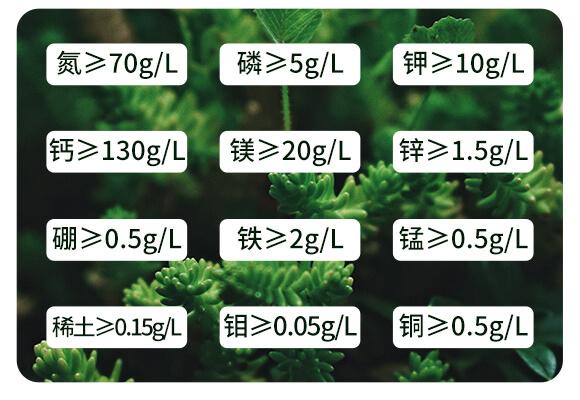 海藻十二元素-邦扶民-英爾果_04