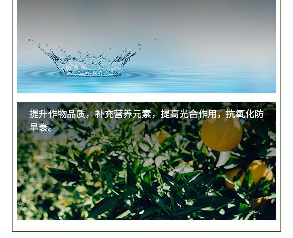 中量元素水溶肥料-糖醇鈣鎂-英爾果_07