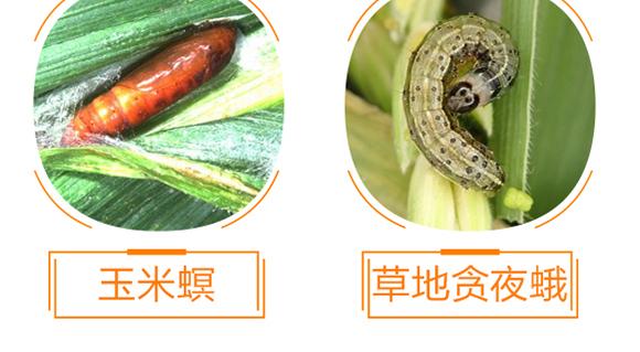 植物生命精华液-金泰亨_11