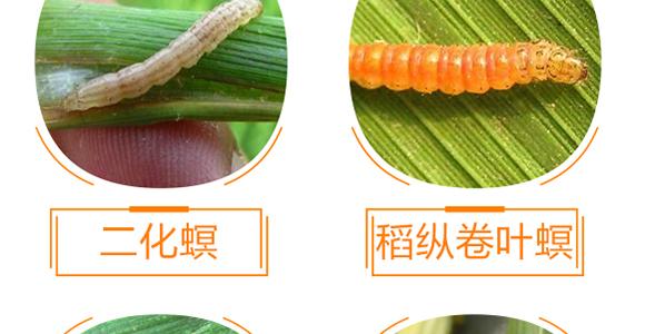 植物生命精华液-金泰亨_10