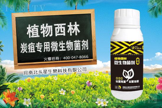 2021年3月20日福福锌杀菌剂价格行情