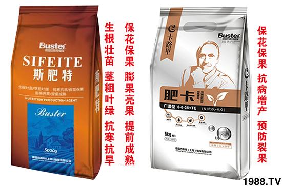 台湾大青枣又称台湾甜枣,果实营养丰富,肉质脆嫩多汁,深受消费者的喜爱,具有非常高经济价值的果树。想要青枣增产、高产,就需要按照青枣需肥规律和特点进行施肥,在不同生长期间需要施入不同元素的肥料,才能保证植株的正常生长,并且生长期中病害的预防也是一个关键问题。
