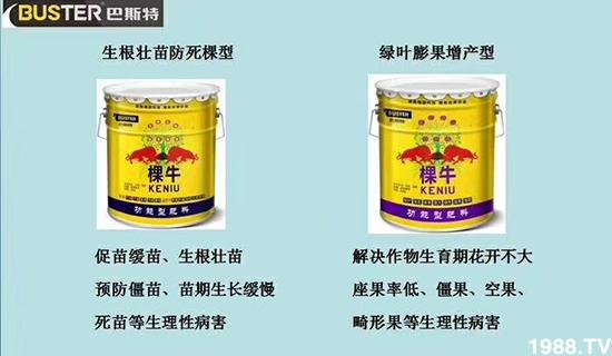 台湾青枣应该如何施肥,青枣各时期施肥方案