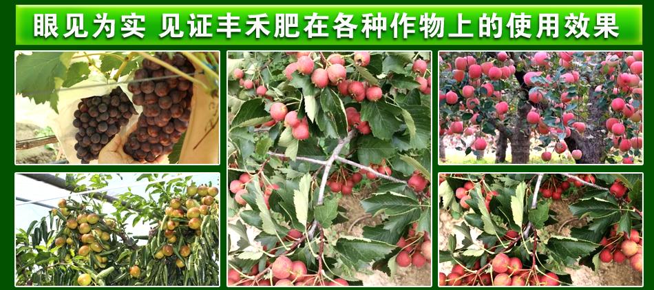 含腐植酸水溶肥料(桶)-蕊丰禾