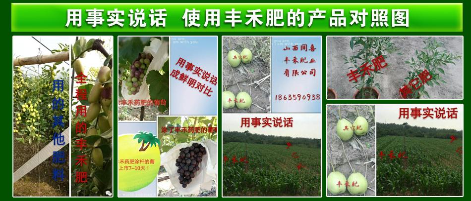 含腐植酸水溶肥料-第3代丰禾1+1-蕊丰禾