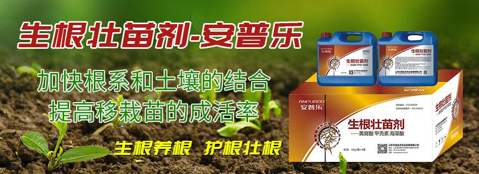 生根壮苗剂-安普乐-万瑞生态