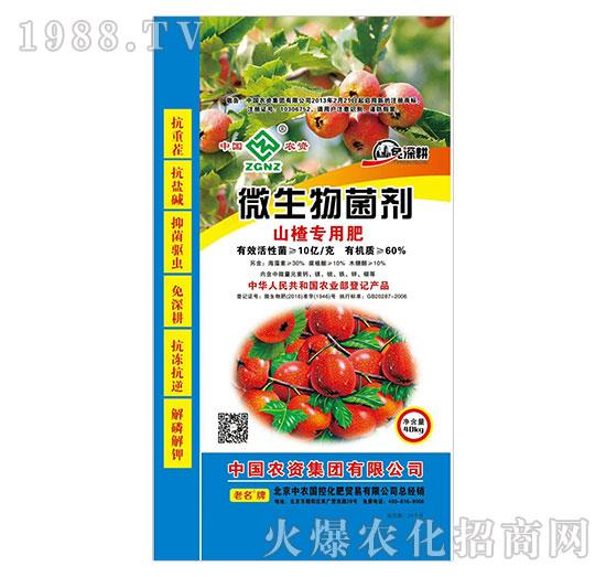 微生物菌剂-山楂专用肥-中农国控