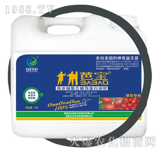 番茄专用(桶)-高浓缩螯合植物蛋白液肥-日正农科