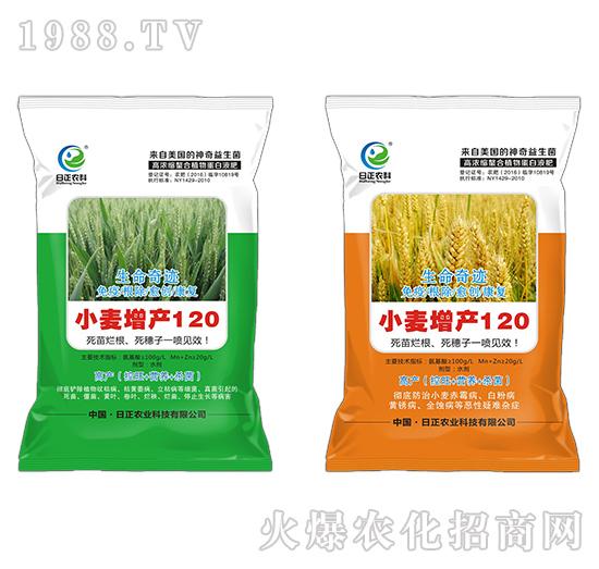 小麦增产120-生命奇迹-日正农科
