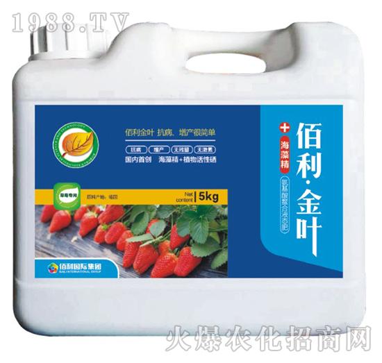 草莓专用-(桶装)佰利・金叶-博佰利