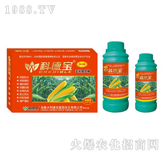 玉米�S�I�B增�a化控��-玉米矮大棒-科德��
