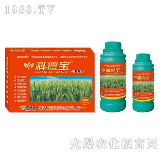 小麦专用营养增产调理剂-科德宝