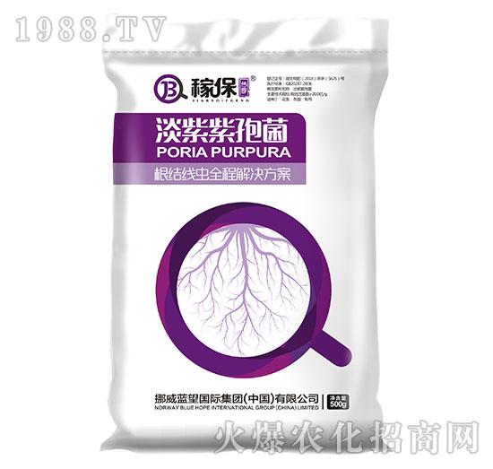 淡紫紫孢菌-稼保传奇-蓝望