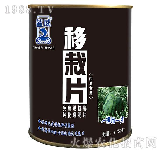 西瓜专用移栽片-鲨威-高晟