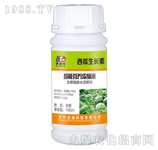 超能营养浓缩液-西瓜生长素-天叶生物