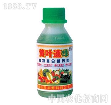 华龙-黄叶速绿