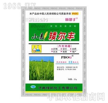 华龙-小麦矮尔丰