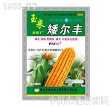 华龙-玉米矮尔丰