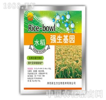 新生力-水稻强生基因