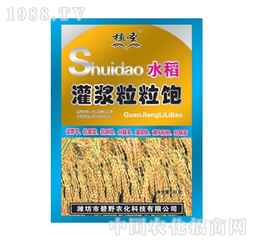 碧野-水稻灌浆粒粒饱