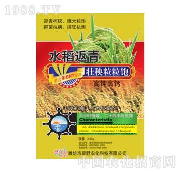 碧野-水稻返青壮秧粒粒