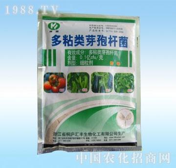 绿春-多粘类芽孢杆菌